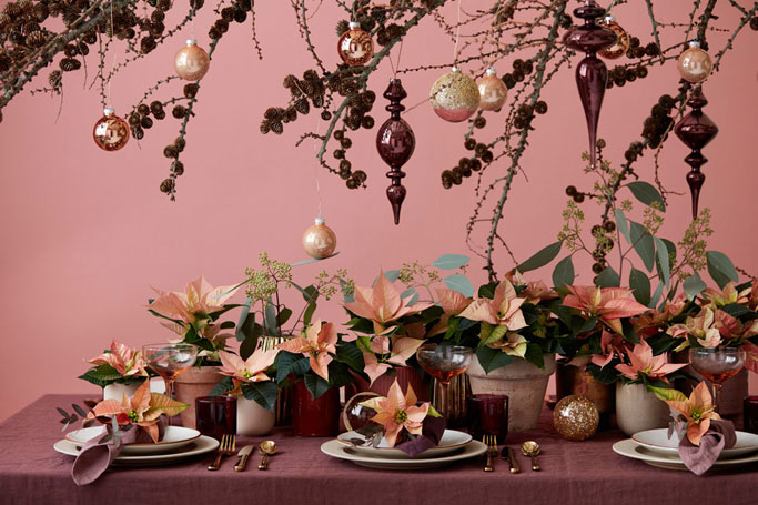 4 Unusual Ways to Style Your Christmas Poinsettia