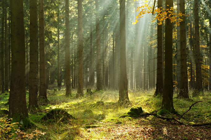 These 8 Magical Forests Will Put a Spell On You