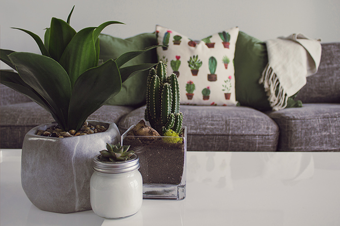 5 Ways Houseplants Can Boost Your Wellbeing
