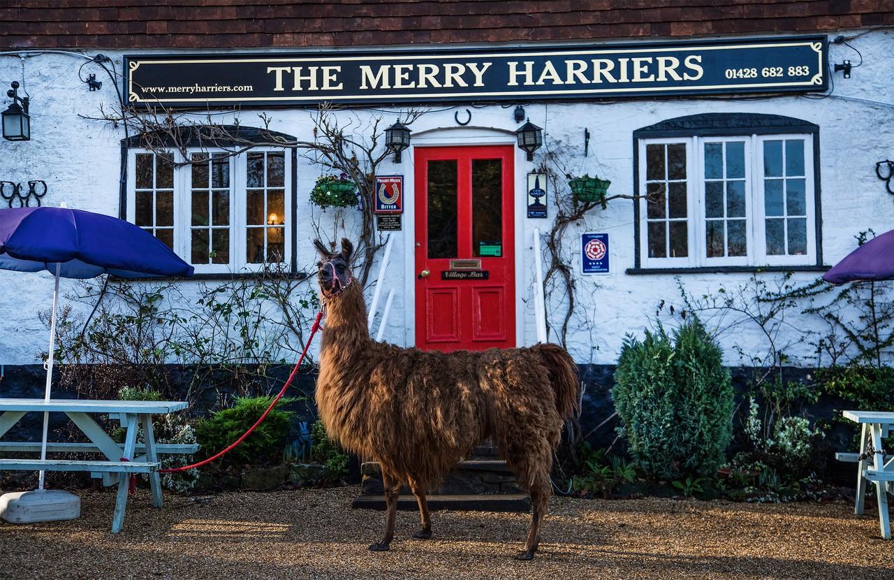 The Merry Harriers, Surrey Hills, UK