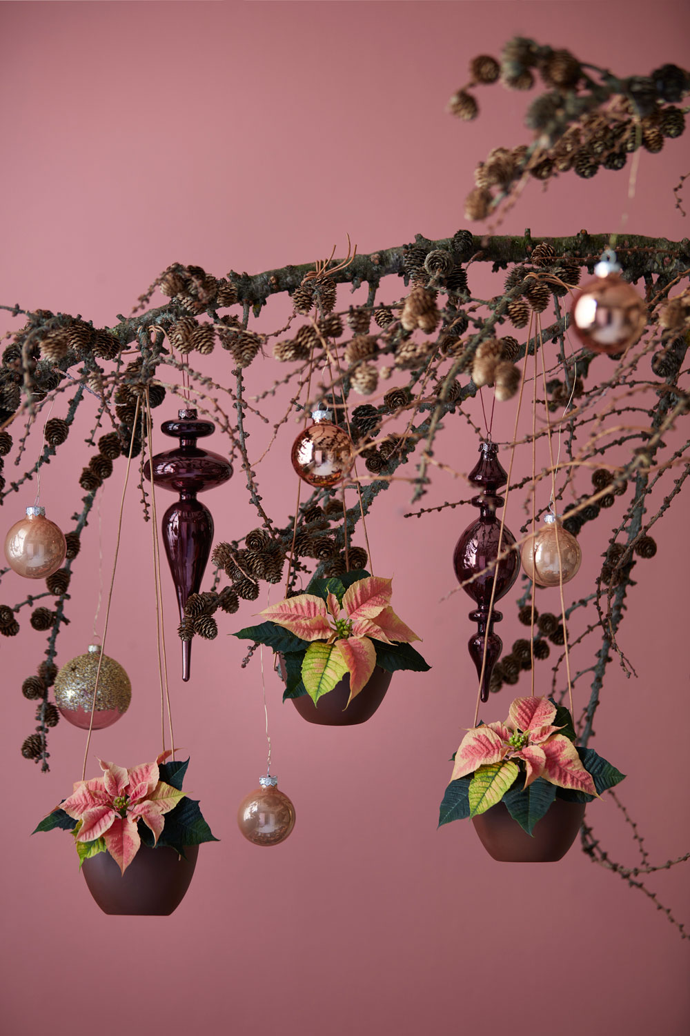 Hang small bowls of poinsettias from festive branches