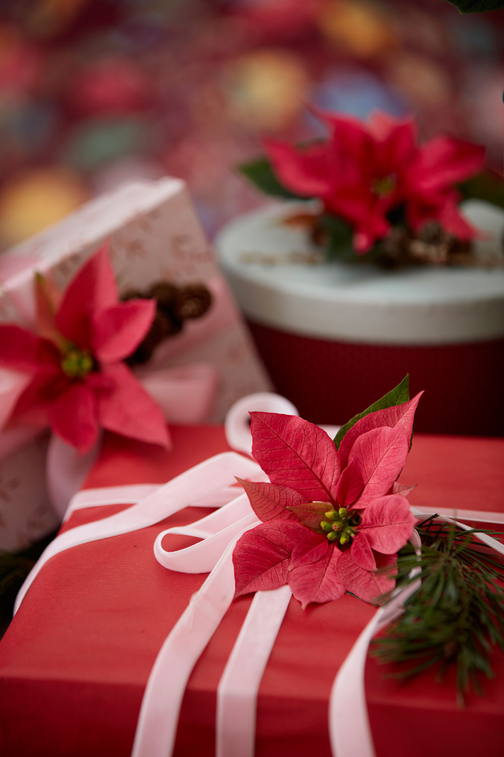 Poinsettias can make the finishing touches to presents