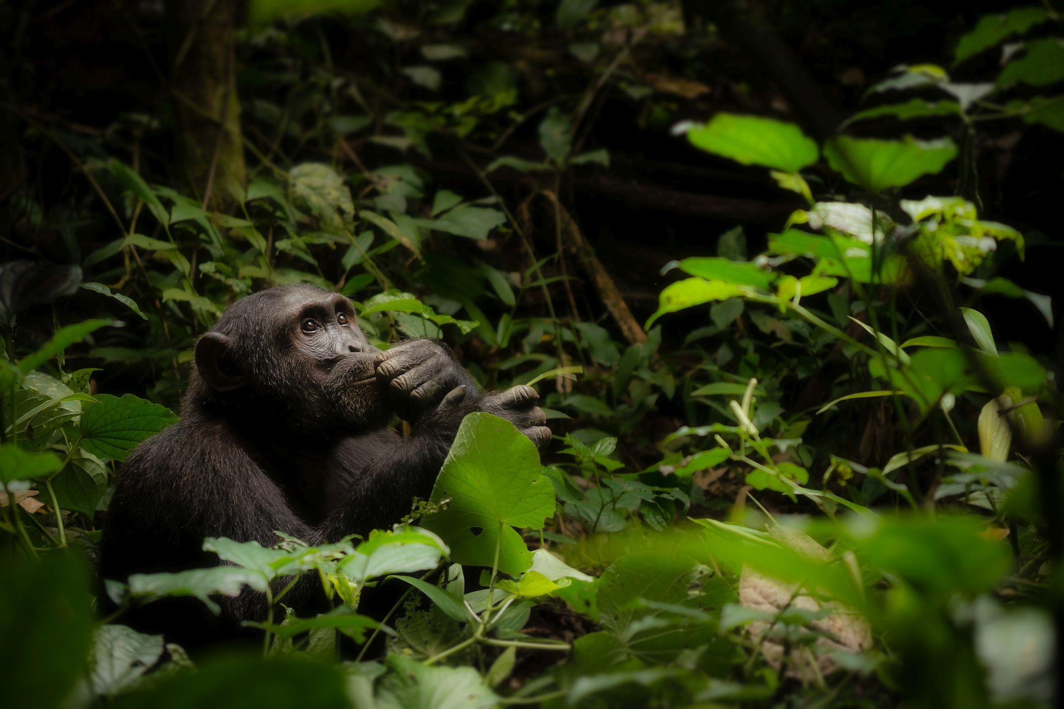 Kibale National Park, Uganda