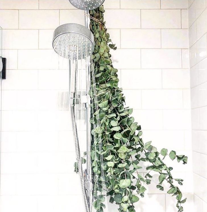 Eucalpytus in bathroom trend