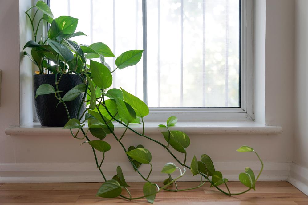 Best indoor houseplants for better sleep