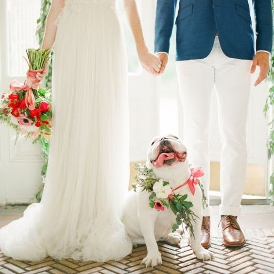How to include your dog in your wedding 13