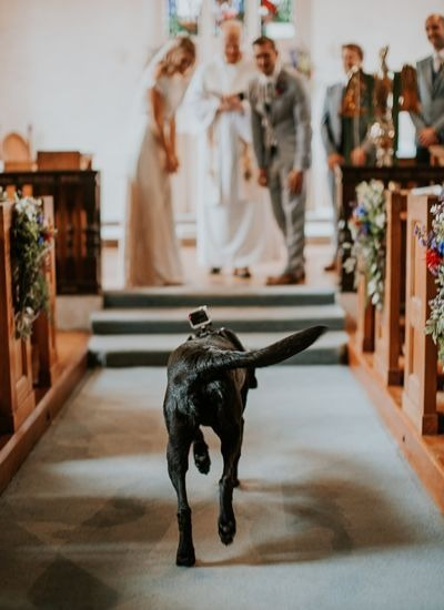 How to include your dog in your wedding 9