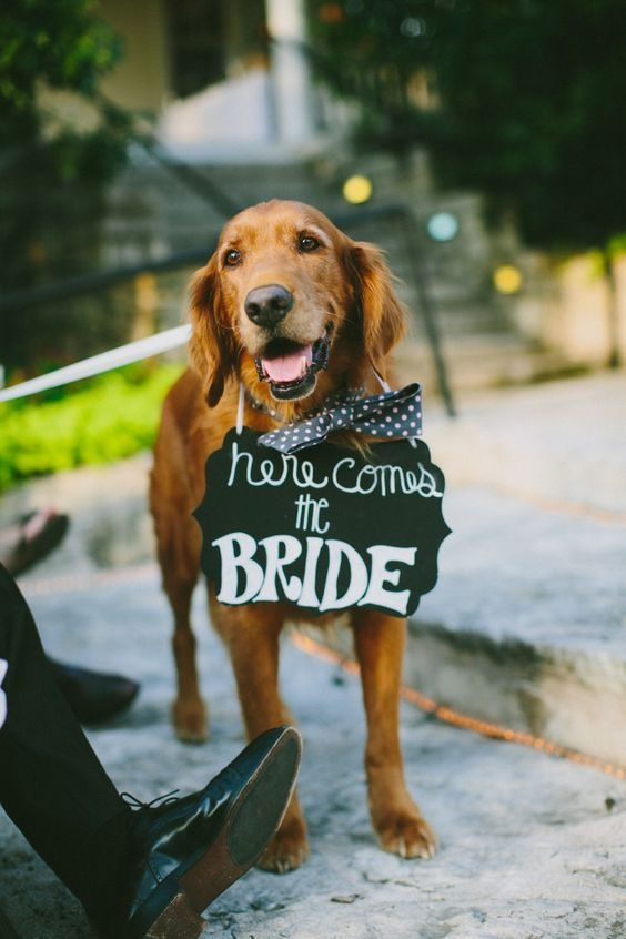 How to include your dog in your wedding 12
