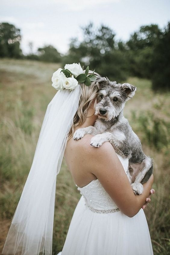 How to include your dog in your wedding 16