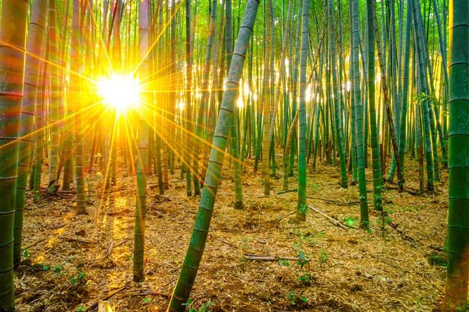 Sagano Bamboo Forest, Japan
