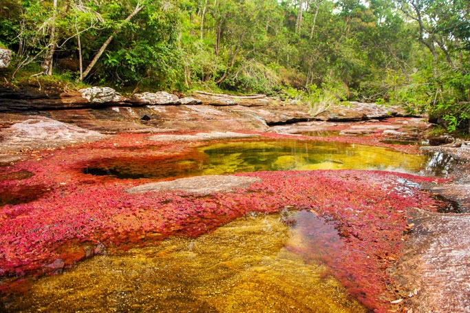 Caño Cristales River, Colombia