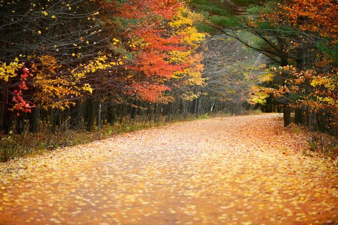 Quebec forest, Canada