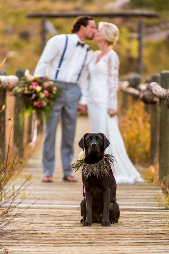 How to include your dog in your wedding 5
