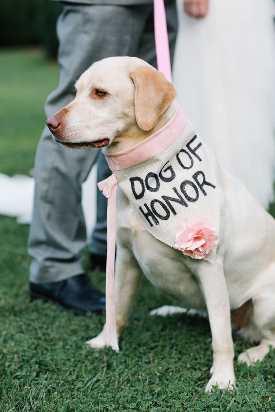 How to include your dog in your wedding 7