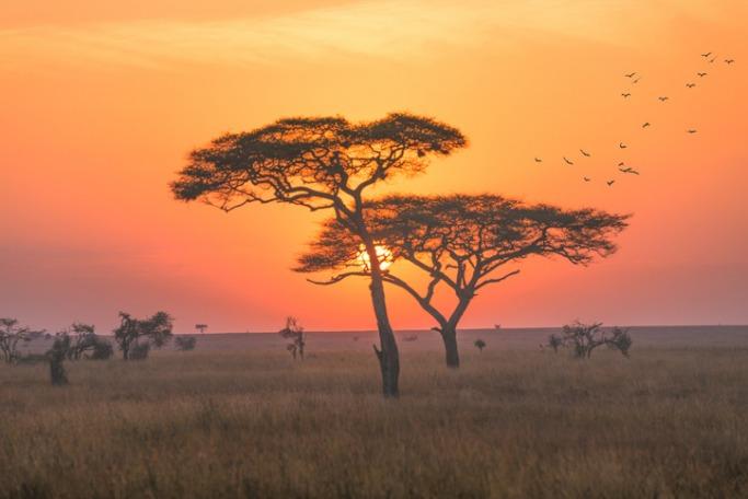 Popular Destinations For Solo Female Travellers: Tanzania