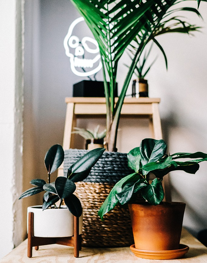 Houseplants are good for your health