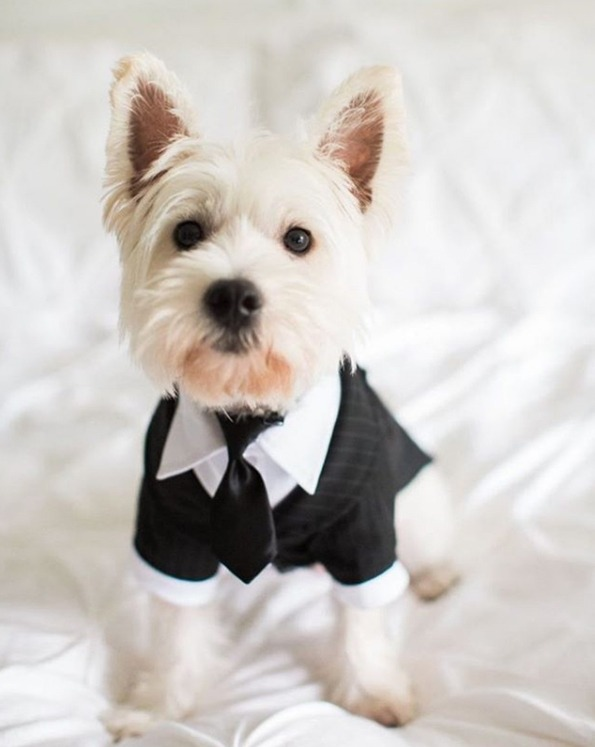 How to include your dog in your wedding 8