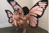 Kylie Jenner And Baby Stormi Twin As Butterflies For Halloween