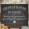 How to include your dog in your wedding 14
