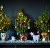 Mini Letterbox Christmas Tree