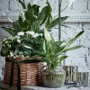 Houseplants in Luxury Basket