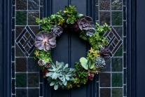 Make Christmas wreath with succulents