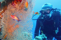 Why you should be diving in Sharm el-Sheikh