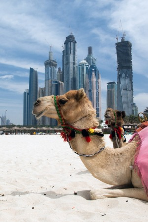 Things To Do In Dubai: October Edition