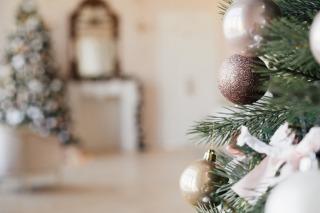 New Evolution surviving a kitchen renovation over Christmas